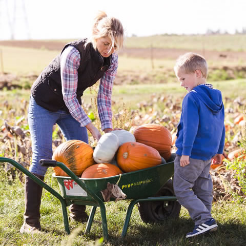 PYO Pumpkins Hoo Rochester Kent